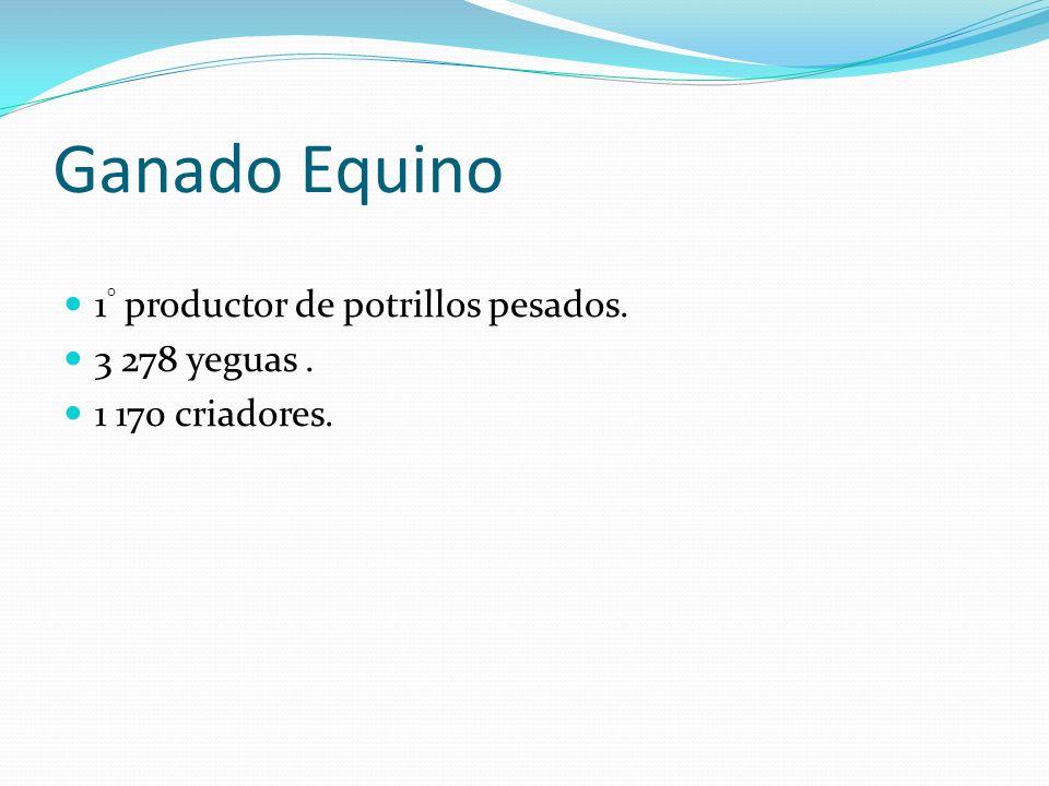 Ganado Equino 1° productor de potrillos pesados. 3 278 yeguas .