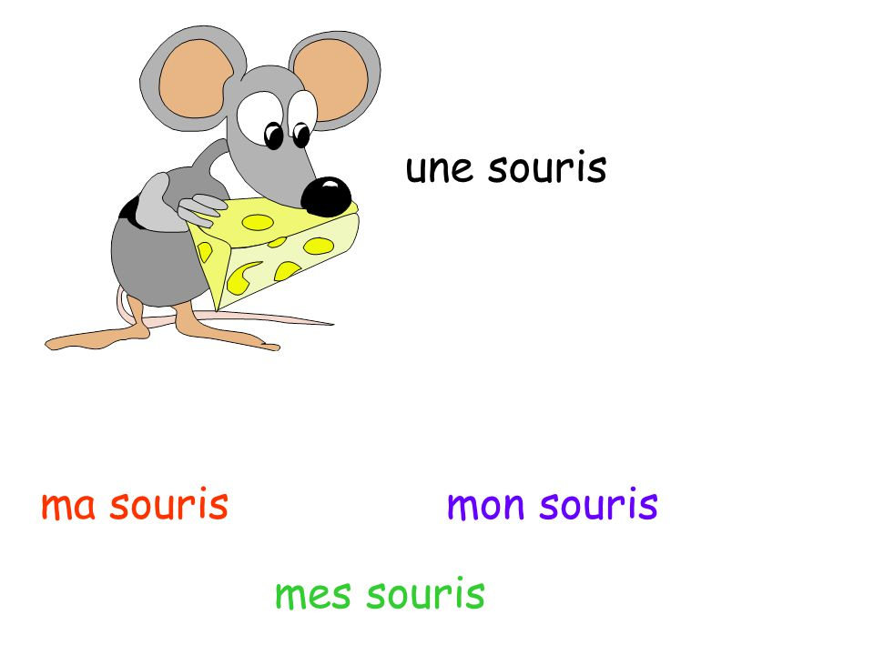 une souris ma souris mon souris mes souris