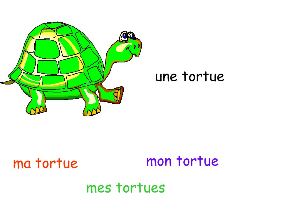 une tortue mon tortue ma tortue mes tortues