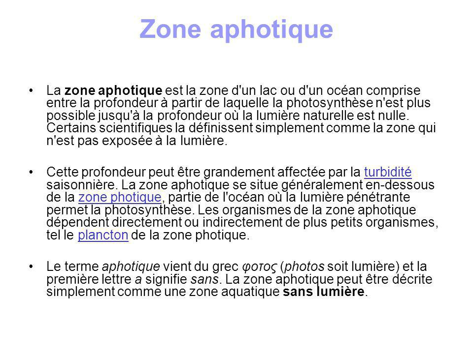 Zone aphotique
