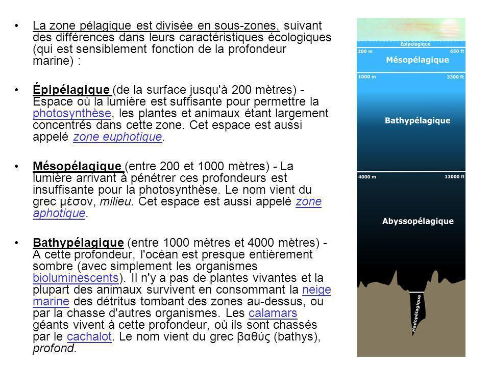 La zone pélagique est divisée en sous-zones, suivant des différences dans leurs caractéristiques écologiques (qui est sensiblement fonction de la profondeur marine) :