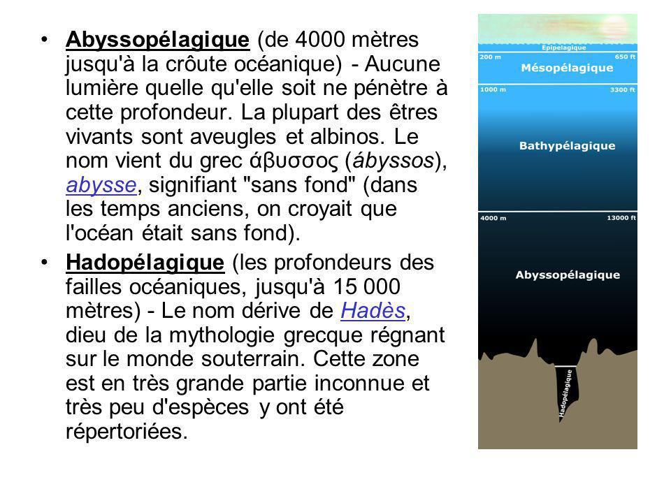 Abyssopélagique (de 4000 mètres jusqu à la crôute océanique) - Aucune lumière quelle qu elle soit ne pénètre à cette profondeur. La plupart des êtres vivants sont aveugles et albinos. Le nom vient du grec άβυσσος (ábyssos), abysse, signifiant sans fond (dans les temps anciens, on croyait que l océan était sans fond).