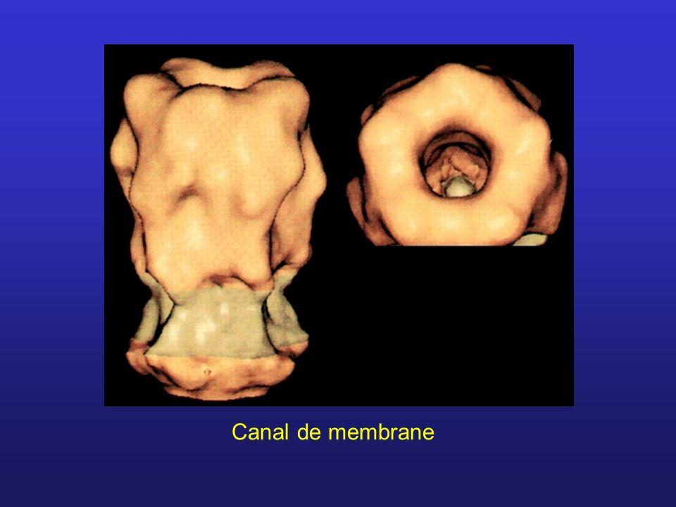 Canal de membrane