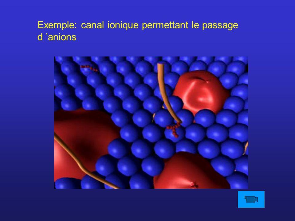 Exemple: canal ionique permettant le passage d 'anions