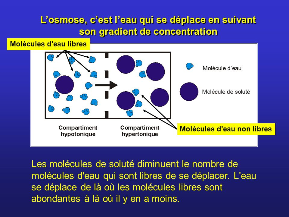 L'osmose, c'est l'eau qui se déplace en suivant son gradient de concentration