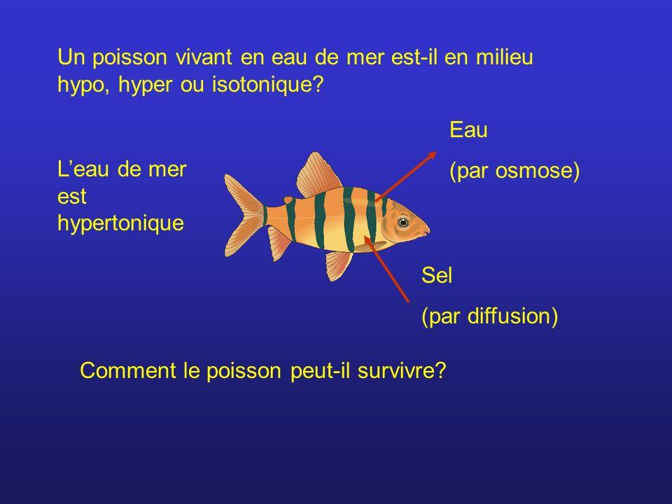 Un poisson vivant en eau de mer est-il en milieu hypo, hyper ou isotonique
