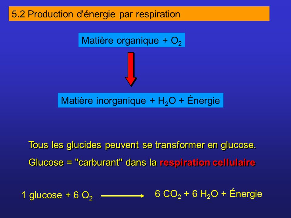 5.2 Production d énergie par respiration