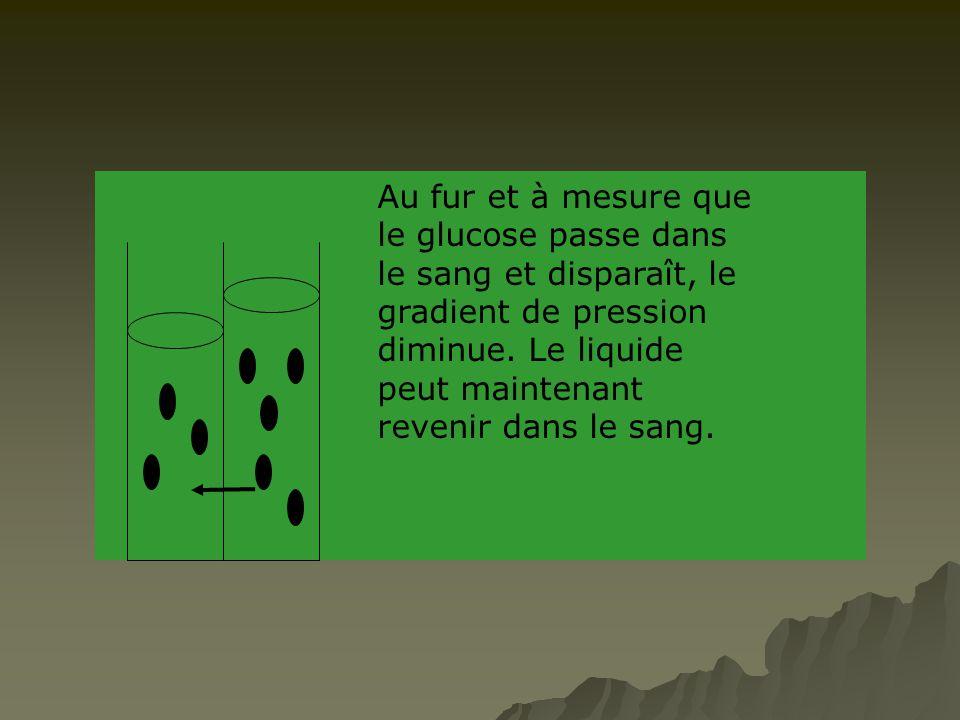 Au fur et à mesure que le glucose passe dans le sang et disparaît, le gradient de pression diminue.