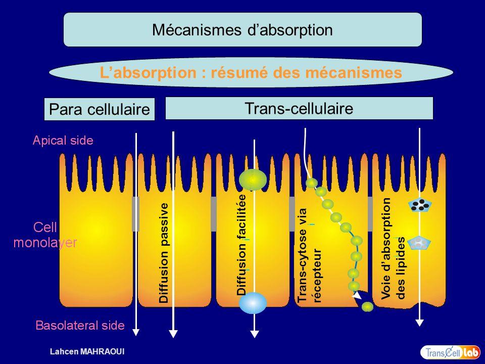 L'absorption : résumé des mécanismes