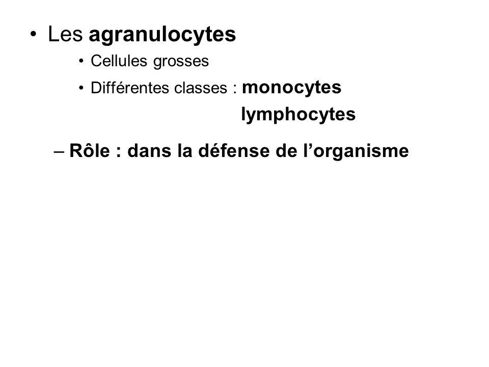 Les agranulocytes lymphocytes Rôle : dans la défense de l'organisme