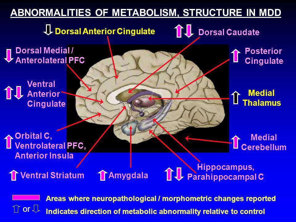 Hippocampus, Parahippocampal C