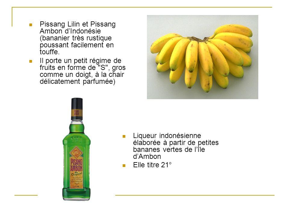 Pissang Lilin et Pissang Ambon d'Indonésie (bananier très rustique poussant facilement en touffe.