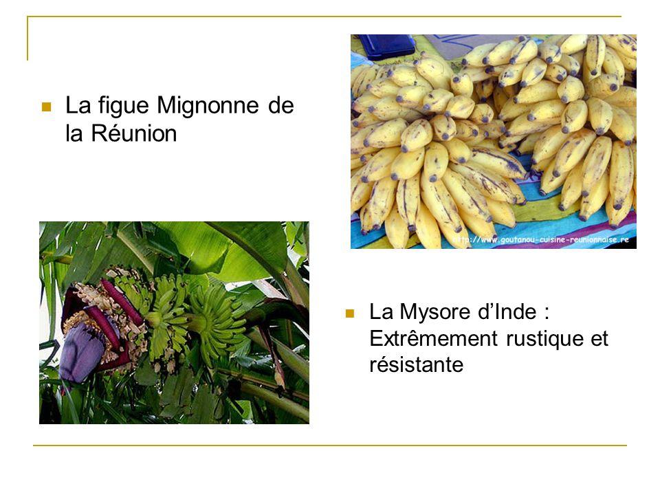 La figue Mignonne de la Réunion