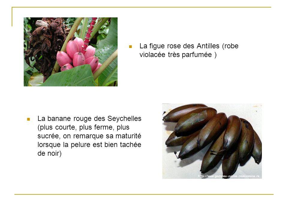 La figue rose des Antilles (robe violacée très parfumée )