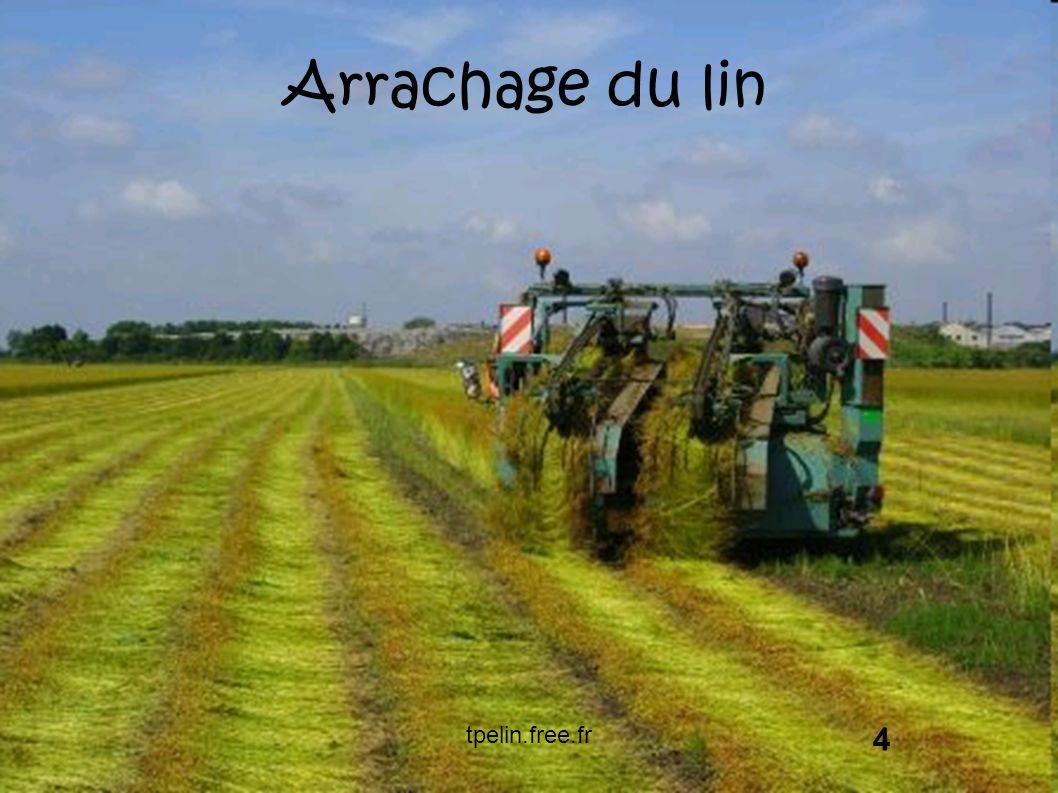 Arrachage du lin tpelin.free.fr