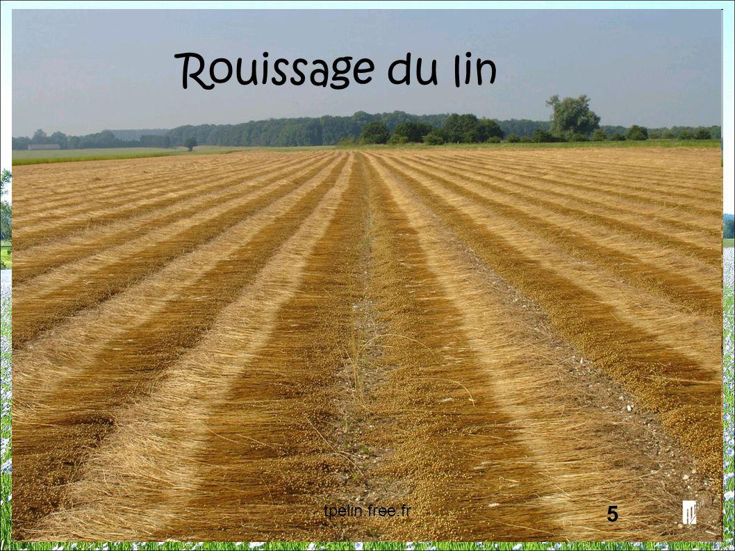 Rouissage du lin tpelin.free.fr