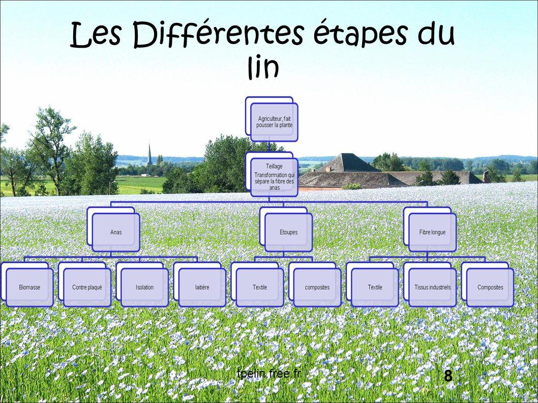 Les Différentes étapes du lin