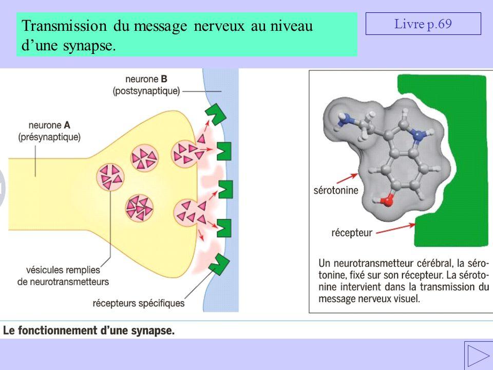 Transmission du message nerveux au niveau d'une synapse.