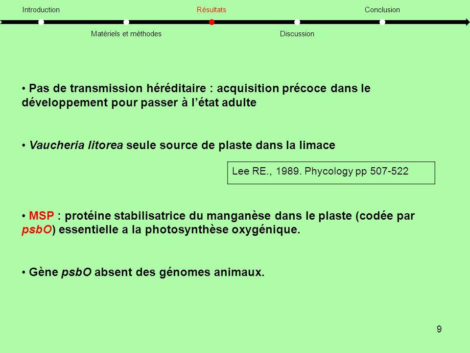 Vaucheria litorea seule source de plaste dans la limace