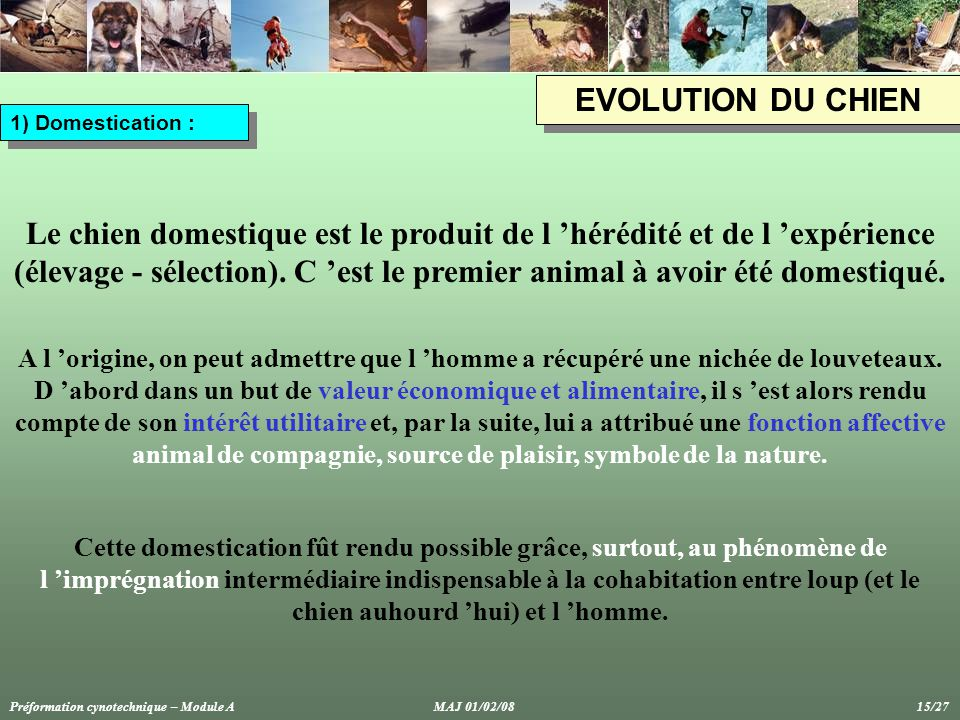 EVOLUTION DU CHIEN 1) Domestication :