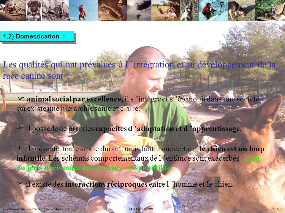 1.2) Domestication : Les qualités qui ont prévalues à l 'intégration et au développement de la race canine sont :