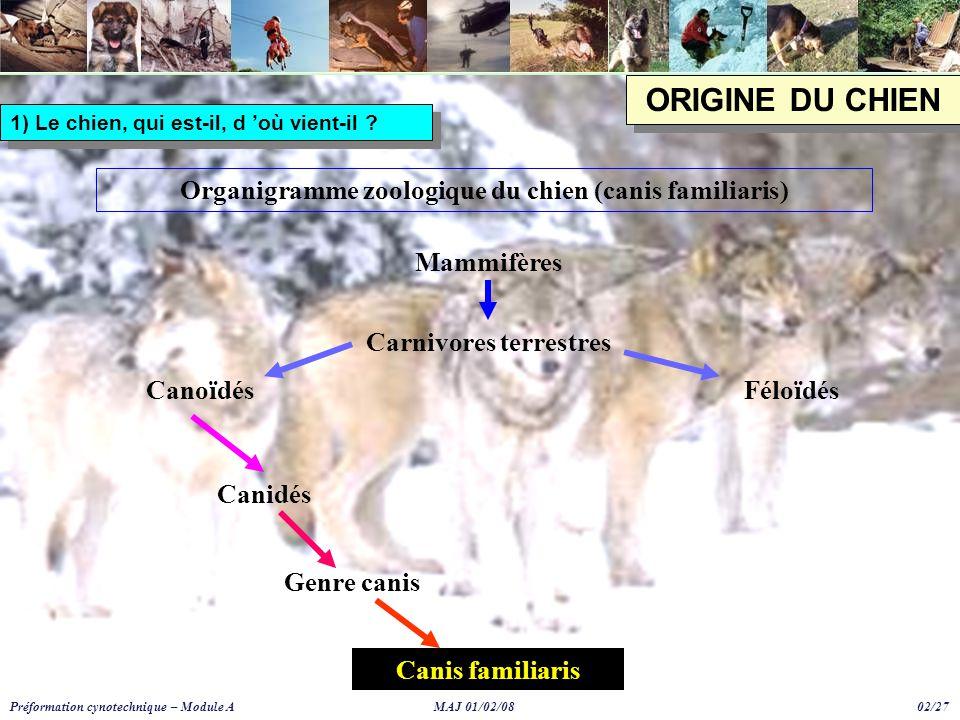 ORIGINE DU CHIEN Organigramme zoologique du chien (canis familiaris)