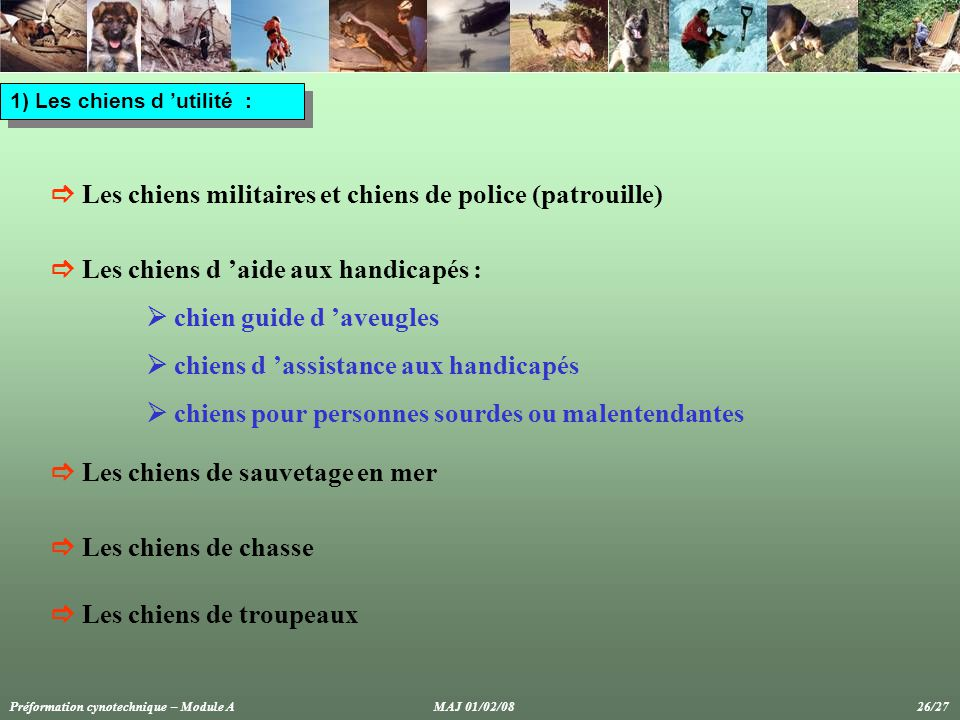  Les chiens militaires et chiens de police (patrouille)