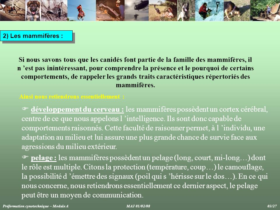 2) Les mammifères :