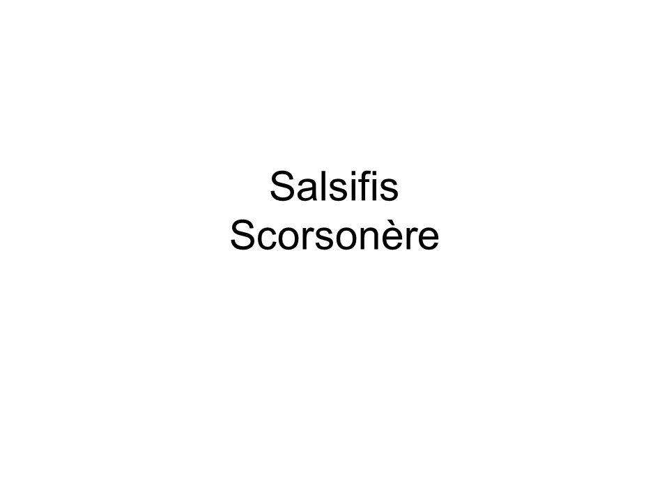 Salsifis Scorsonère
