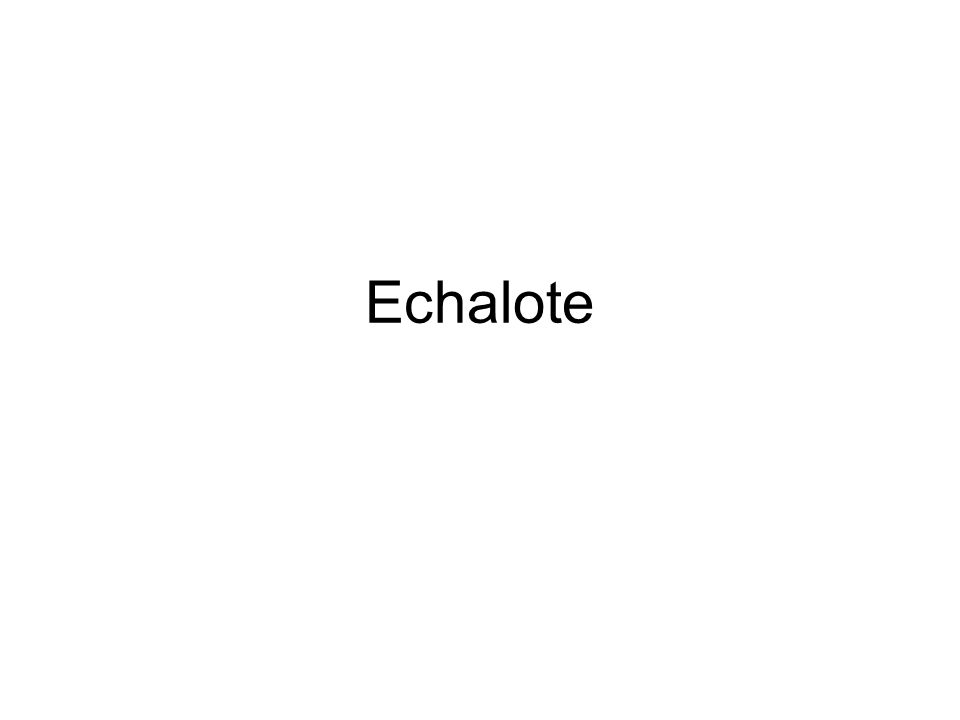 Echalote