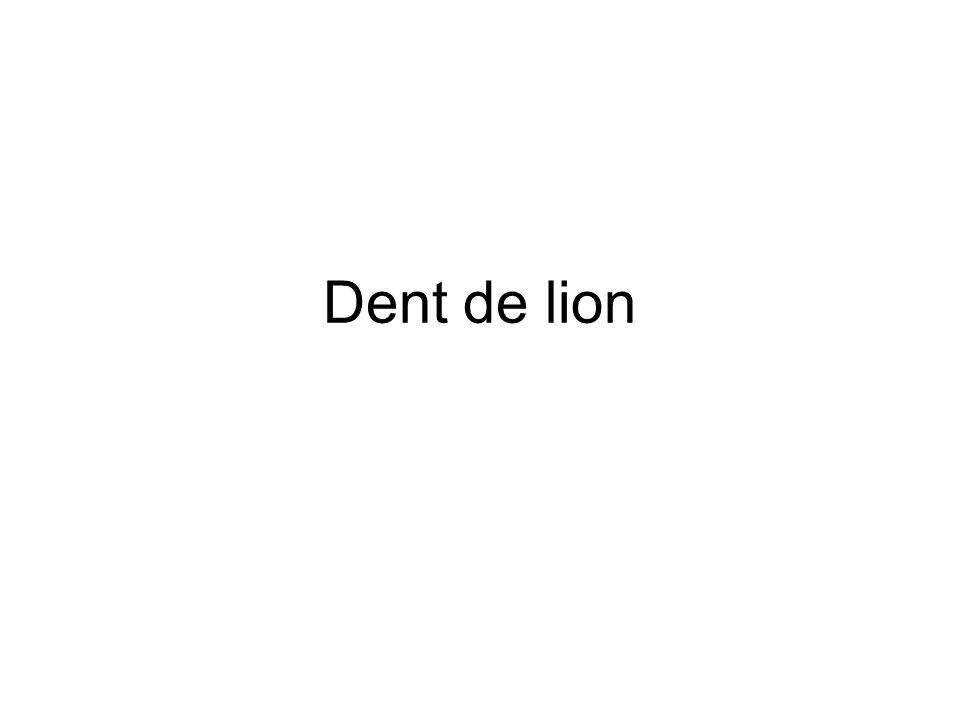 Dent de lion