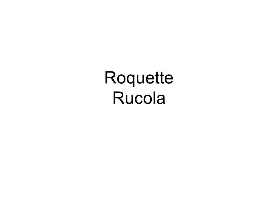 Roquette Rucola