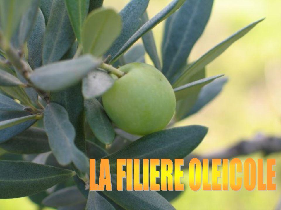 LA FILIERE OLEICOLE