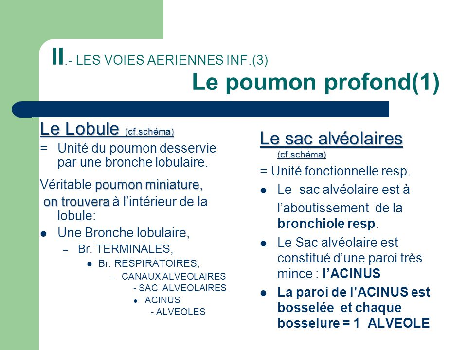 II.- LES VOIES AERIENNES INF.(3) Le poumon profond(1)