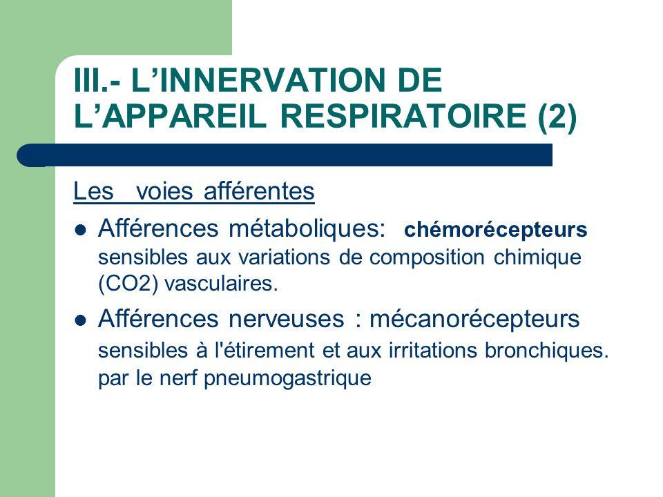 III.- L'INNERVATION DE L'APPAREIL RESPIRATOIRE (2)