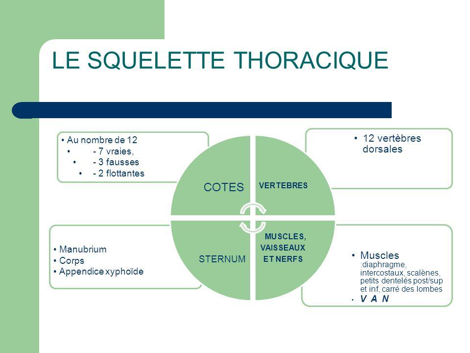 LE SQUELETTE THORACIQUE