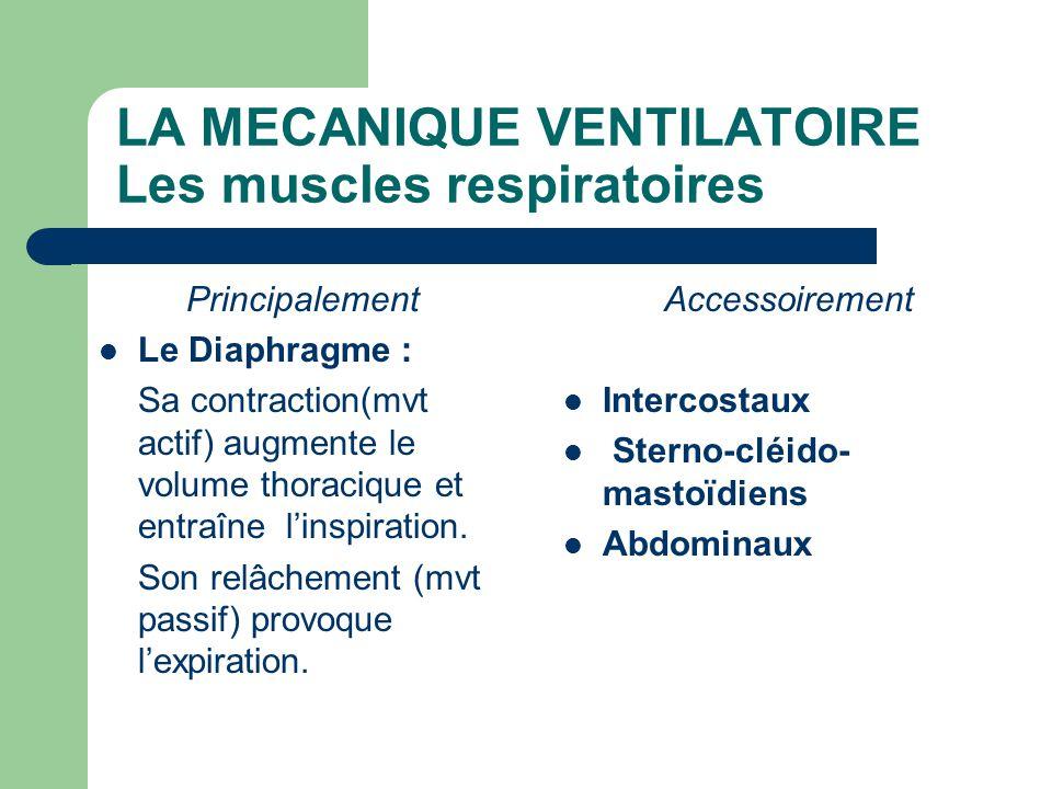 LA MECANIQUE VENTILATOIRE Les muscles respiratoires