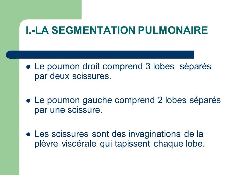 I.-LA SEGMENTATION PULMONAIRE
