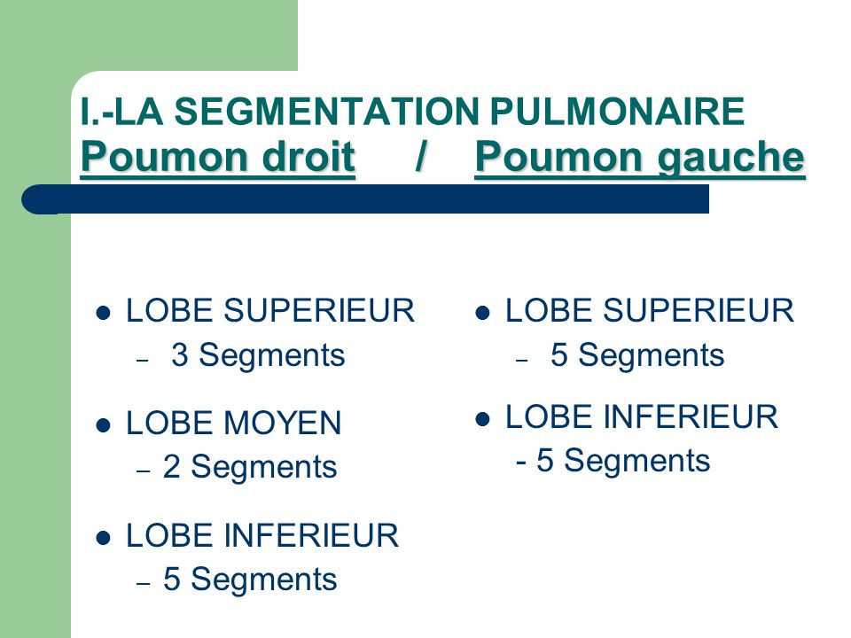 I.-LA SEGMENTATION PULMONAIRE Poumon droit / Poumon gauche