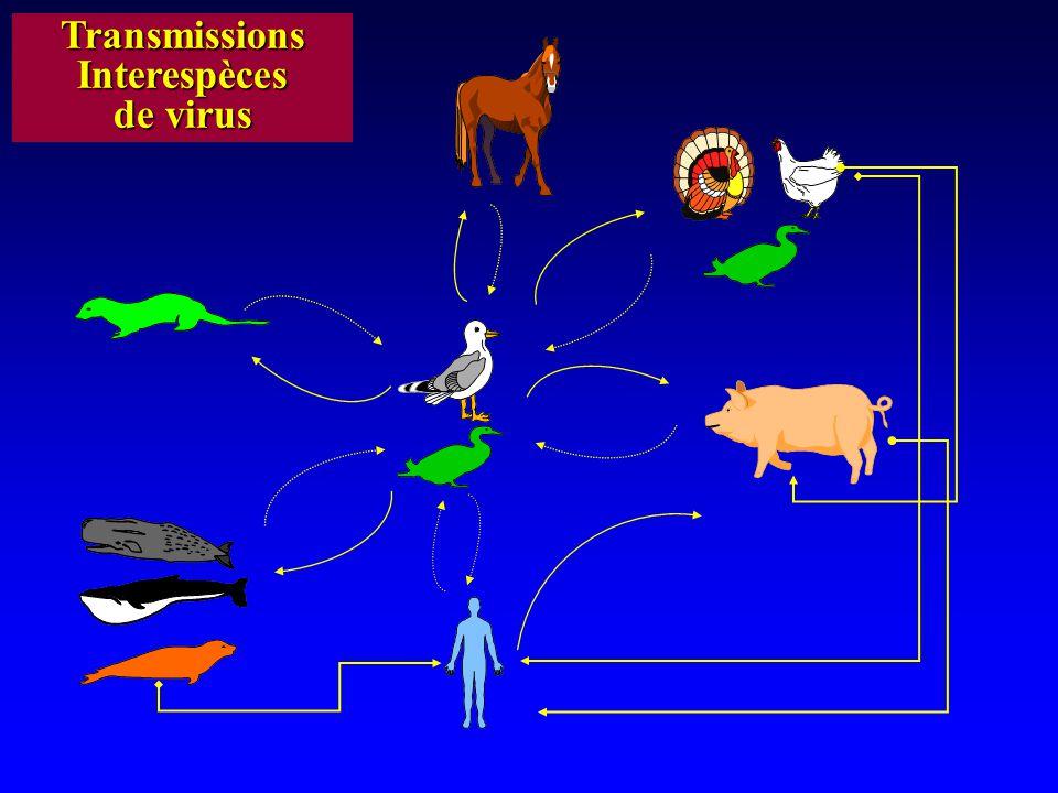 Transmissions Interespèces de virus