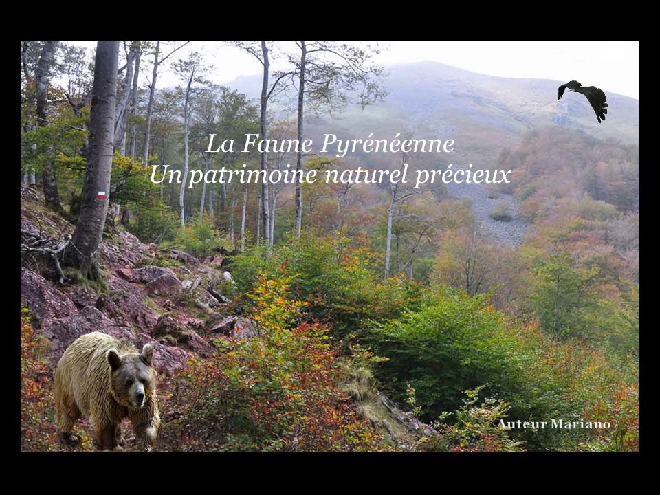 Un patrimoine naturel précieux