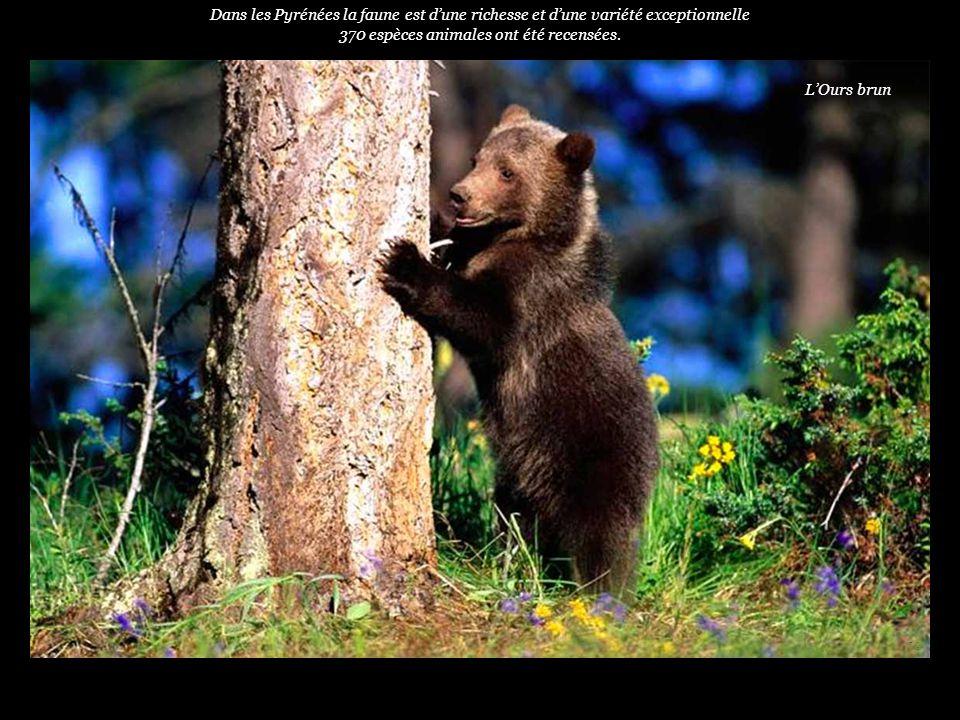 370 espèces animales ont été recensées.