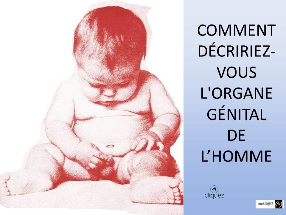COMMENT DÉCRIRIEZ-VOUS L ORGANE GÉNITAL DE L'HOMME