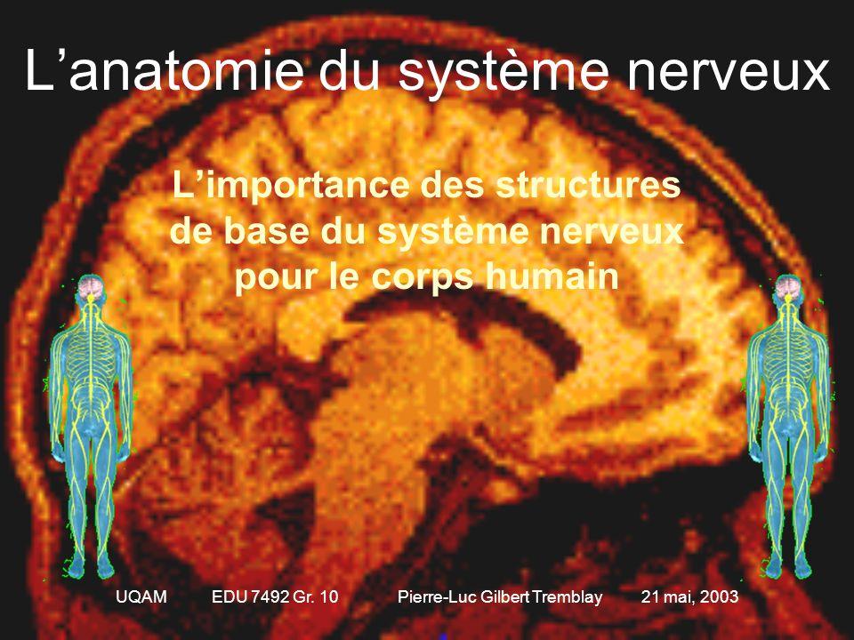 L'anatomie du système nerveux