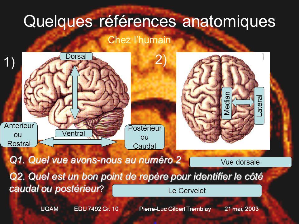 Quelques références anatomiques