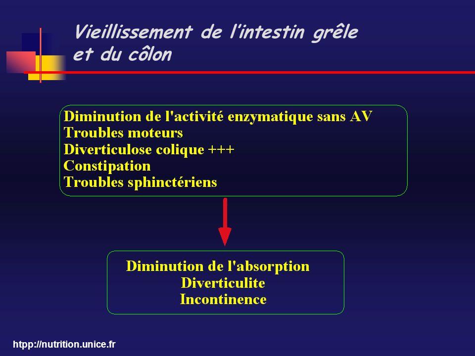 Vieillissement de l'intestin grêle et du côlon