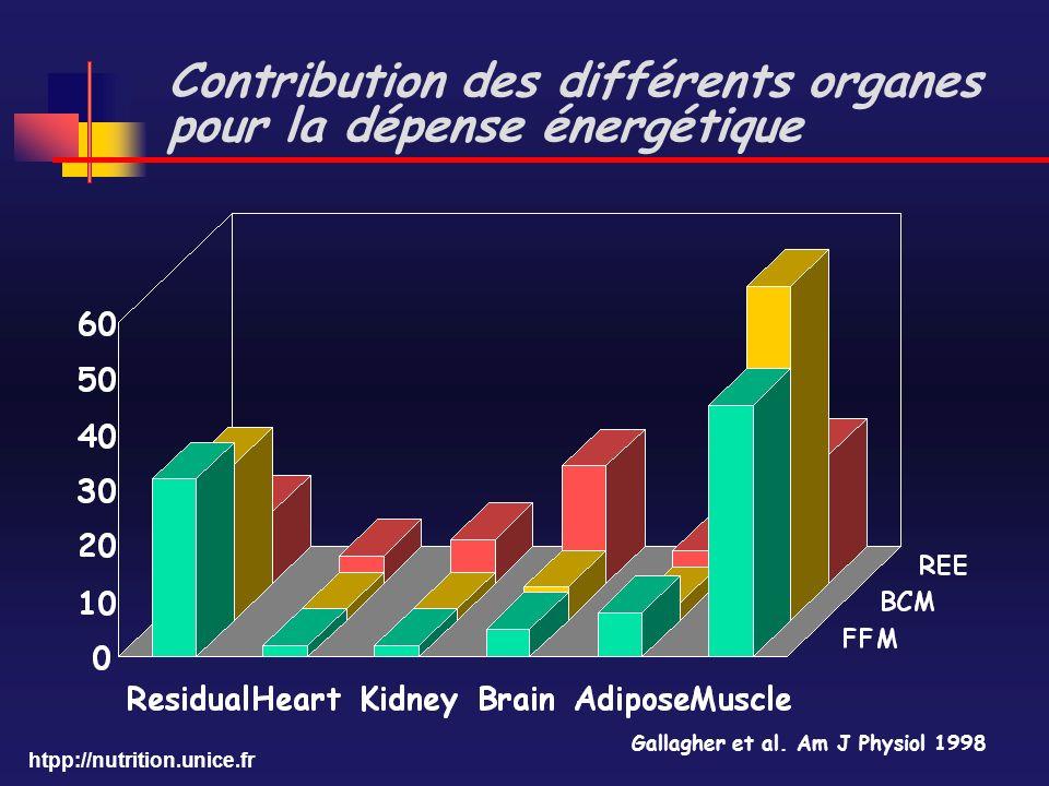 Contribution des différents organes pour la dépense énergétique