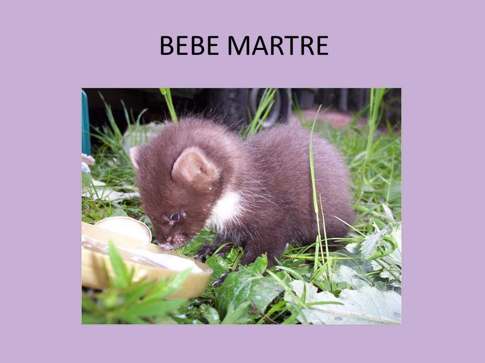 BEBE MARTRE
