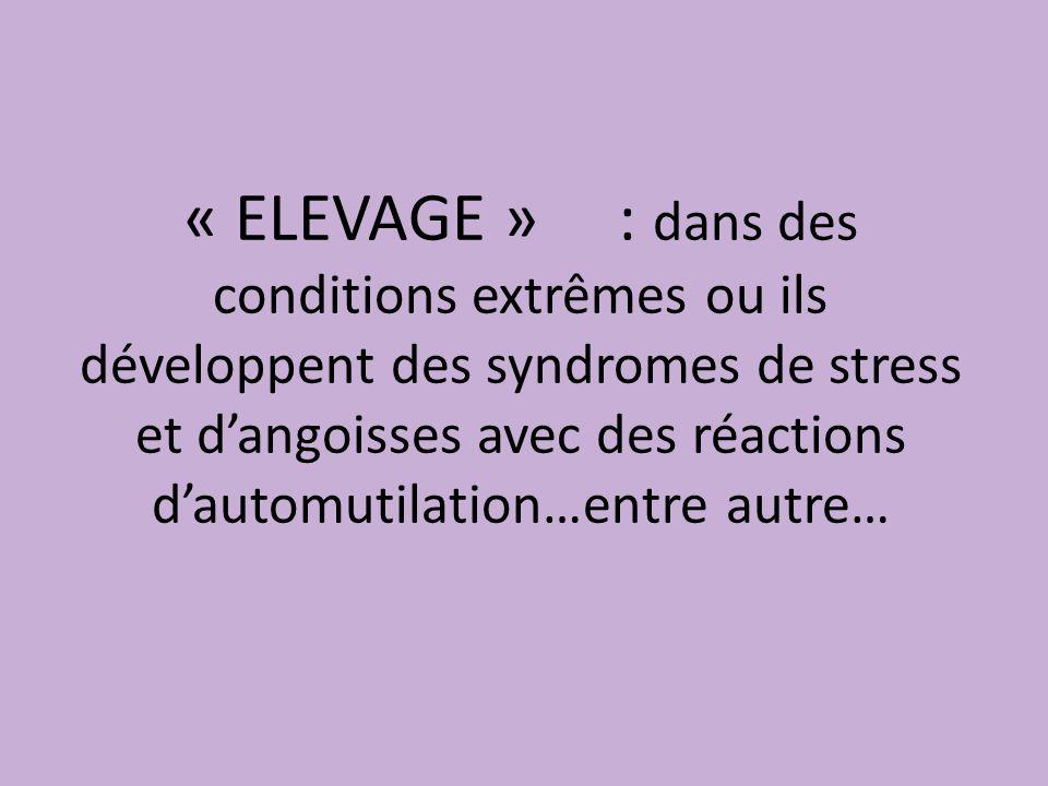 « ELEVAGE » : dans des conditions extrêmes ou ils développent des syndromes de stress et d'angoisses avec des réactions d'automutilation…entre autre…