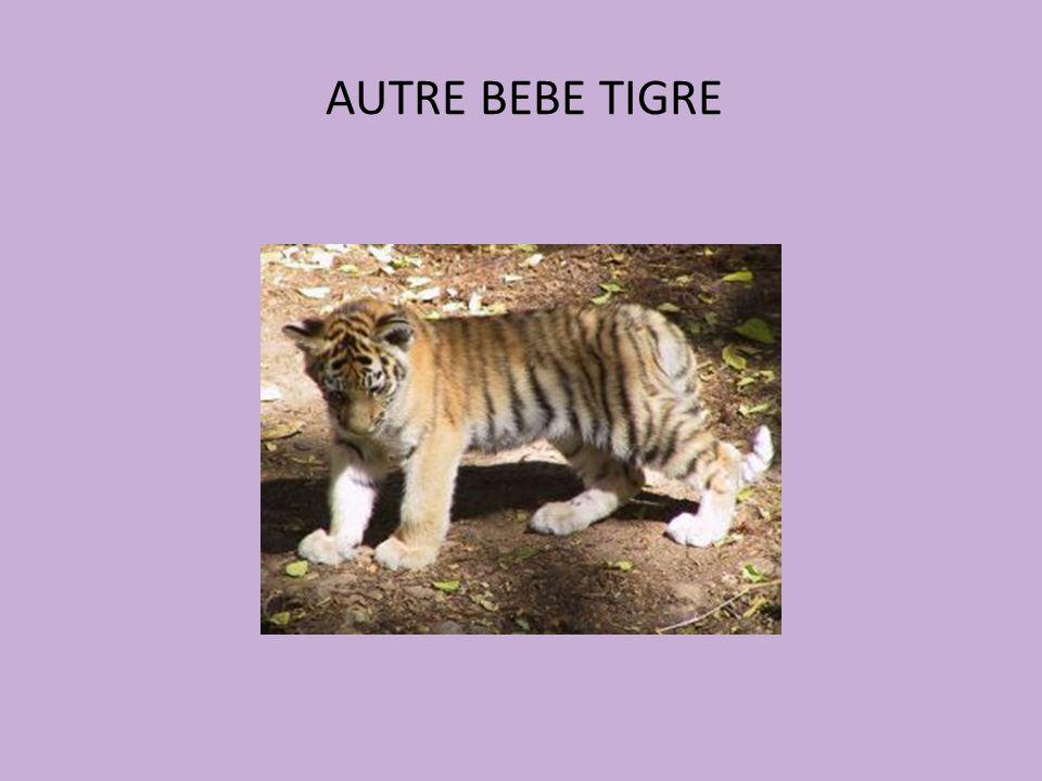 AUTRE BEBE TIGRE